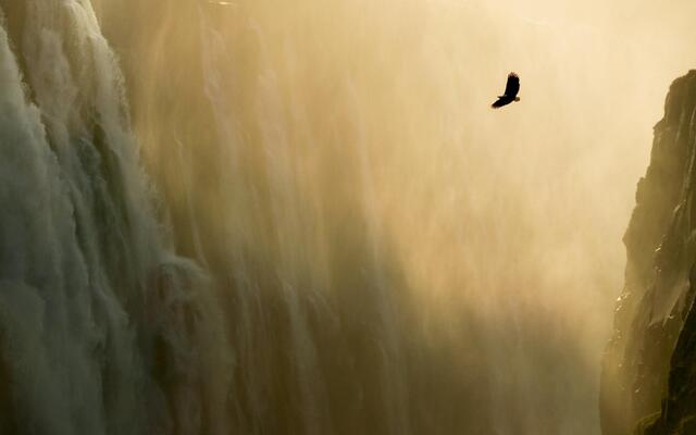 Eagle & Waterfall.jpg